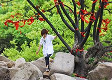 乱石中的爱情树